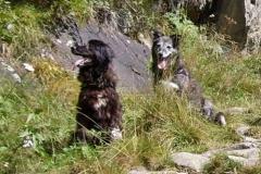2011-08-30_Lucky_und_Lupa_bei_einer_Bergwanderung_Obergurgl