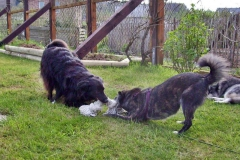 2008-04-27_Toben_im_Garten_3