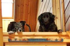 2008-04_Luckys_und_Lupas_neuer_Ausguck