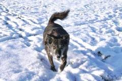 2009-01-11_Schneewalze_Lupa