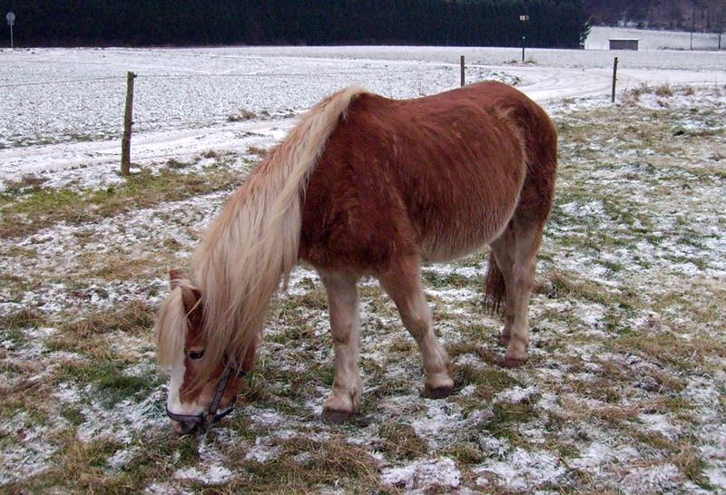 2009-01_Ankunft_von_Lena