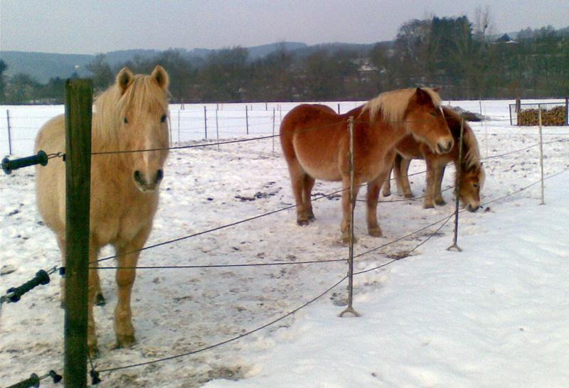 2010-02_drei_Pferde_im_Schnee