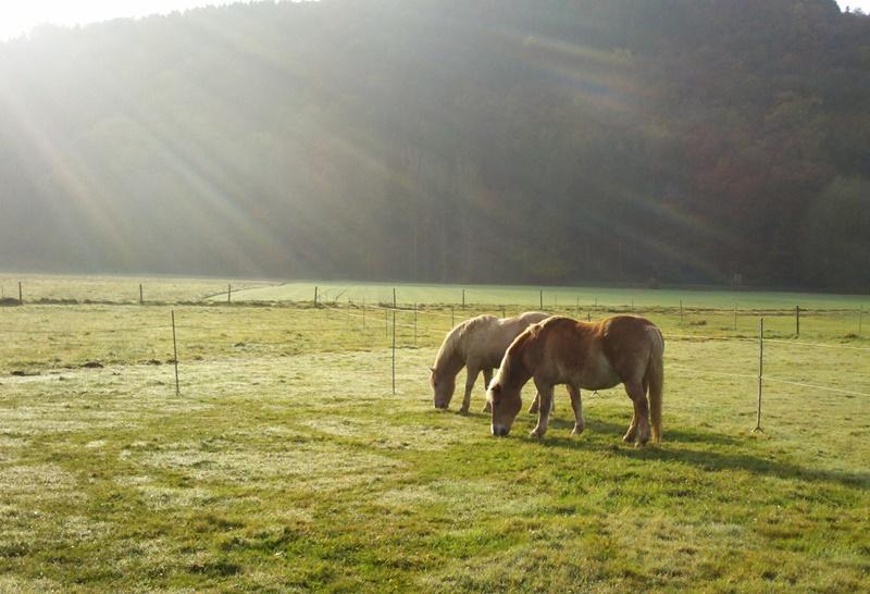 2011-11-01_Aron_und_Finn_in_der_Morgensonne