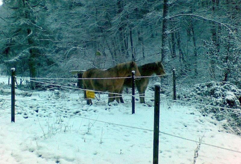 2012-12-03 erster Schnee im neuen Paddock