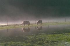 2011-01-16_Pferde_im_Nebel