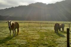 2011-11-01_Herde_in_Morgensonne