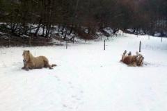 2013-03-16 Spass im Schnee