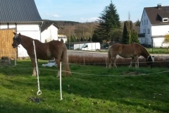 2015-04-09_Ponys_im_Vorgarten