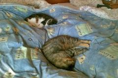 2012-05-10_Anji_und_Ronja_im_Bett